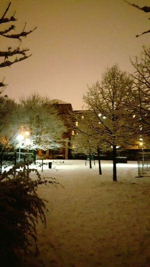 A Winter's Evening Walk Hanging Out Enjoying Myself Taking Photos Priceless How You Celebrate Holidays