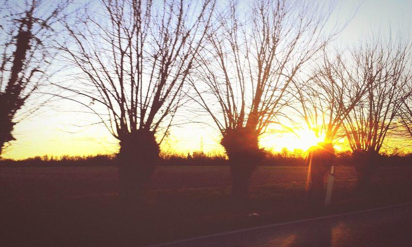 Three Friuli Castions Di Strada Campagna Sunset Silhouettes