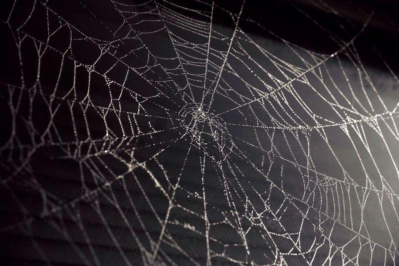 Spiderweb Web Monochrome Black & White Blackandwhite Black&white