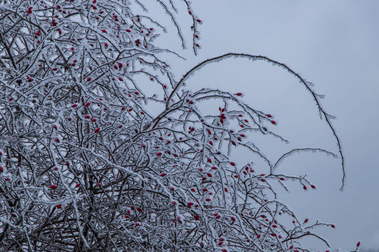 Low angle view of flowering plant against sky during winter