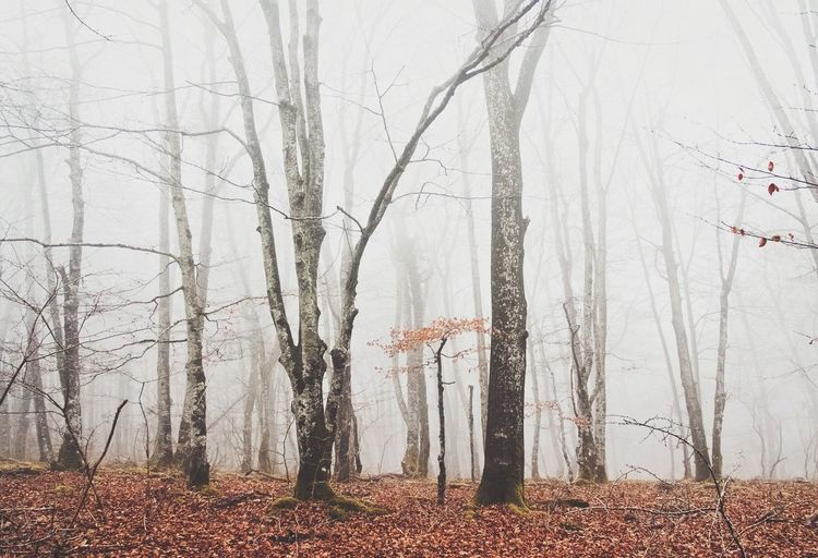 The Great Outdoors - 2017 EyeEm Awards Bare Tree Nature Landscape Tranquility Forest 🌳 ☁ 🌳 Beauty In Nature Picoftheday Art Is Everywhere Fog Orduña Landscape_Collection Place Beautiful Nature The Color Of Love Tranquility Calm Life