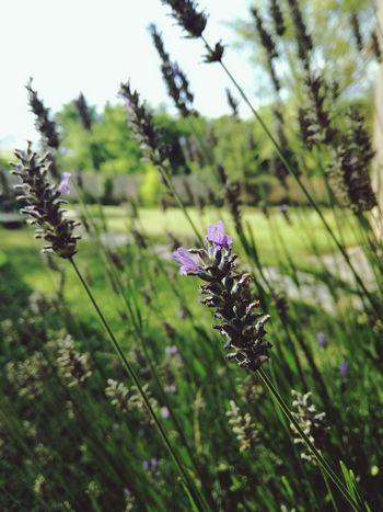 EyeEm Best Shots - Nature Summer Nature Beauty In Nature Beauty In Nature ❤️❤️