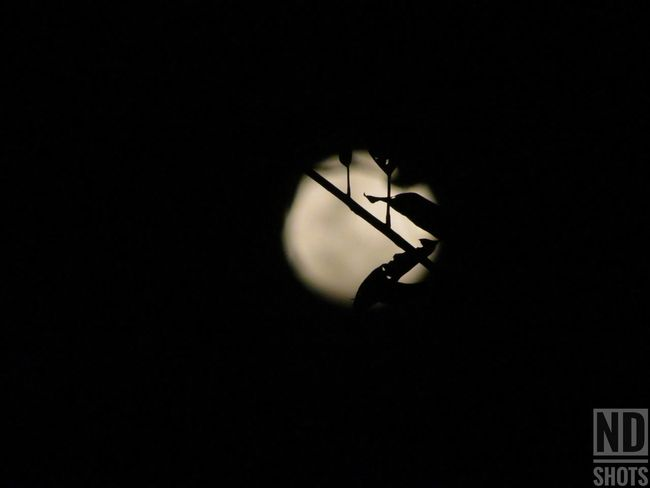 #moon#moonlight#myshot#canon #illgrammers#darksky Micro Macrophotography Macrolovers Eyem Myshotsmyphotography Canon Canonphotography Canon5Dmk3 Justgoshoot visual feast #moon #Dark