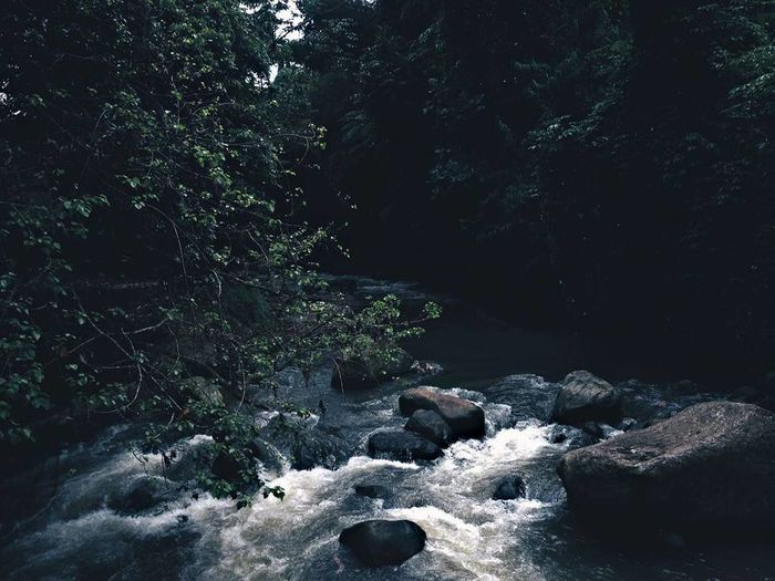 River Beauty In Nature Tree Nature Outdoors No People Forest Dark Photography