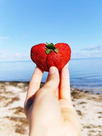 Cropped hand holding strawberry at beach against sky