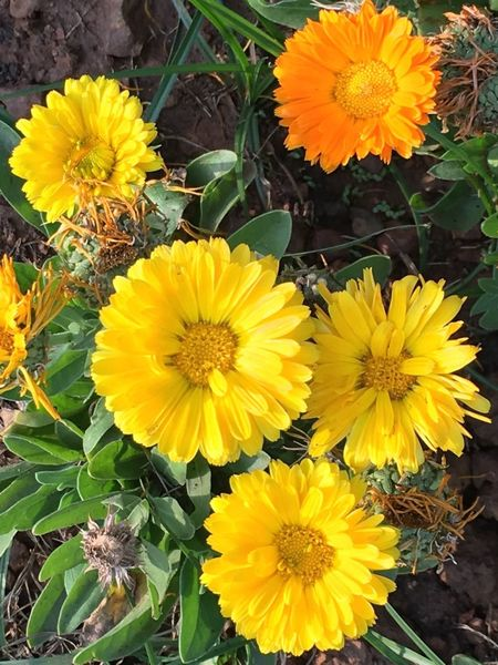 Flower Yellow Fragility Flower Head Petal Freshness Beauty In Nature Nature Plant Leaf Pollen Daisy Outdoors Blooming No People Sunflower Growth Blossom Yellow Color Day