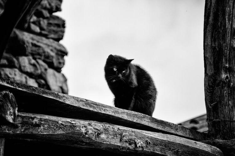 Black Cat One