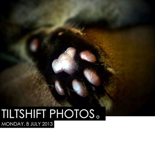 Photooftheday InstaCC Instaccplaywithphotosd4 Tiltshift K8marieuk Petsofig Photo365 Petoftheday Petsofinstagram Cats Cats Catsofig Catsofinstagram Tabby Tabbys Tabbysofig Tabbysofinstagram Fluffy Cute Paws Jellybeans Jellys Toes Jellybeantoes Iphoneonly
