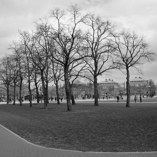 Bare trees in park against sky
