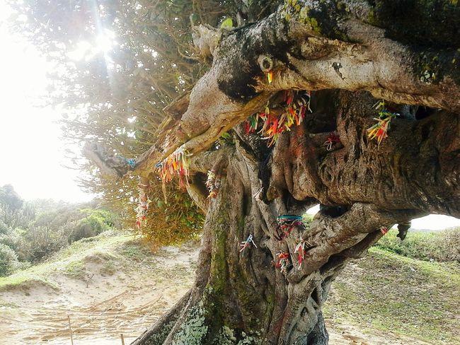 Arvore Nature Day Tree Sky Love Amor Natal - RN Árvore do Amor, mais de perto, em Natal, RN