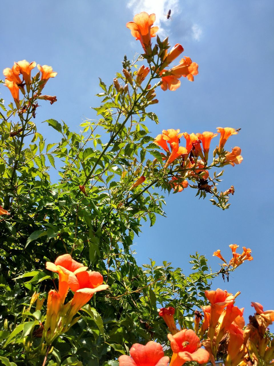 orange color, growth, flower, beauty in nature, nature, petal, freshness, fragility, day, blooming, plant, flower head, no people, outdoors, low angle view, close-up, sky, tree
