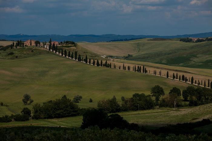 Val D'Orcia, Tuscany, Italy. Travelling through the countryside. Country Countryside Cypress Cypress Trees  Cypresshill Hills Hillside Italy Landscape Landscapes With WhiteWall Nature Travel Travel Photography Traveling Travelphotography Tuscany Tuscany Countryside Tuscany Italy Tuscanygram Val D'orcia