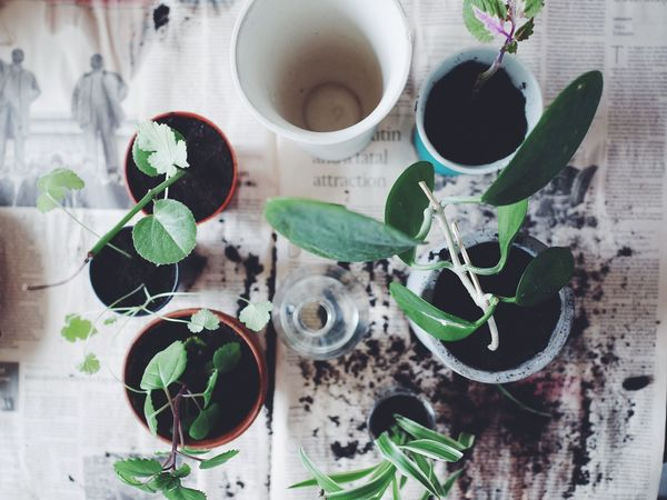 High Angle View Indoors  Overhead View Leaf Table No People Green Color Growth Nature Close-up Day Freshness Full Frame Indoor Photography Flowers Differential Focus Replanting Pots Soil Potted Plant Potted Plants Freshness Top View Nature Growth