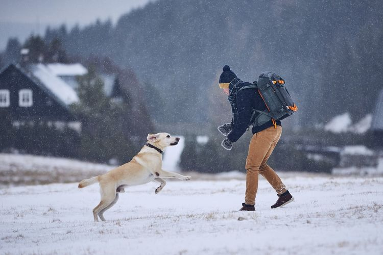 Friendship between pet owner and his dog. Young man playing with labrador retriever in winter landscape. Jizera mountains, Czech Republic Man Young Adult Young Men People Pet Owner Warm Clothing Snow Snowing Winter Cold Temperature Pets Dog Domestic Animals Labrador Frost Togetherness Friendship Nature Running Jumping Happiness Enjoyment Playing Rural Scene