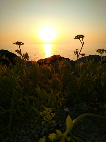 Hello World Sunsetlover Seaside Sunset Sunshine Reflection Naturelovers Sea And Sky Taking Photos