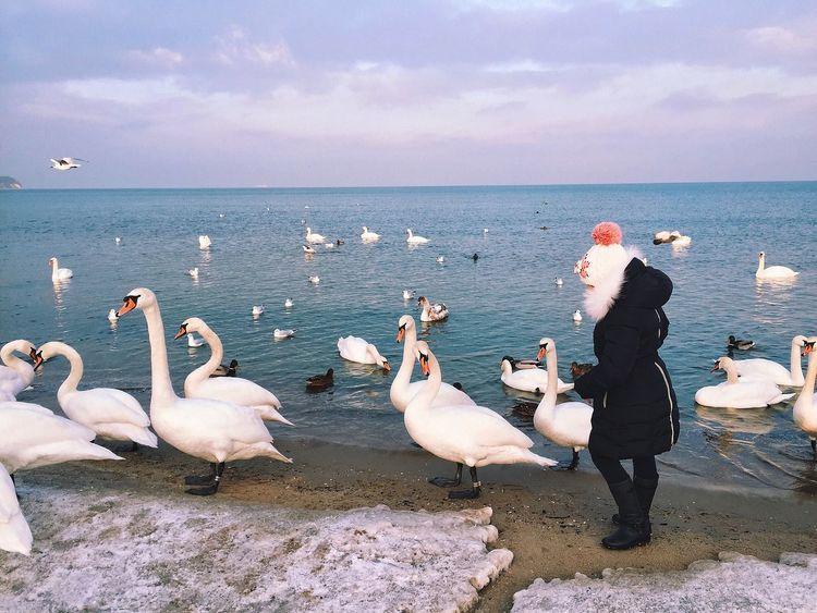 Iphoneonly ShotOniPhone6 EyeEm Best Shots Mobilephotography Swan Winter Beautiful Sky Beautiful Nature Water Reflections TheWeekOnEyeEM IPS2016Winter