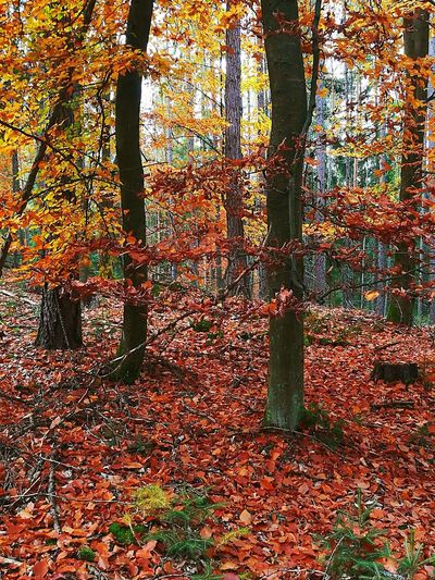 Beauty In Nature Autumn Colors Tree Forest Perspectives On Nature