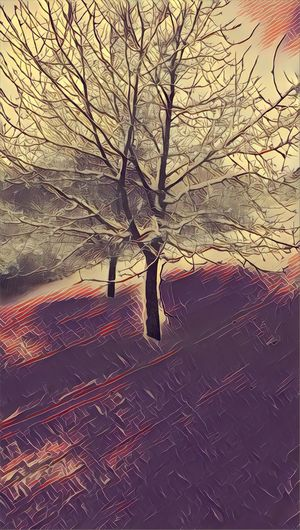 Tree Outdoors Cold Temperature GreatFreiburg Snow