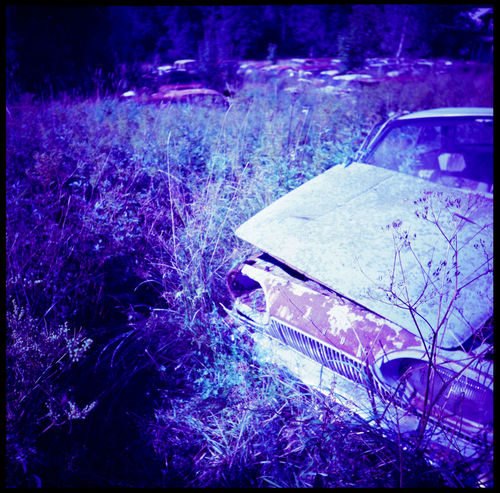 True Blue Metal in Båstnäs Analogue Photography Artistic Båstnäs Car Cemetery Car Cemetery - Old Rusty English Damaged Cars Cars Daisies Industrial Scandinavia Sweden Travel Abandoned Abandoned Car Cemetery Abandoned Cars Apocalyptic Blue Båstnäs Car Cemetery Cars In Forrest Cold Metal Metal And Nature Summer Swedish Summer Tungsten  Vintage Cars