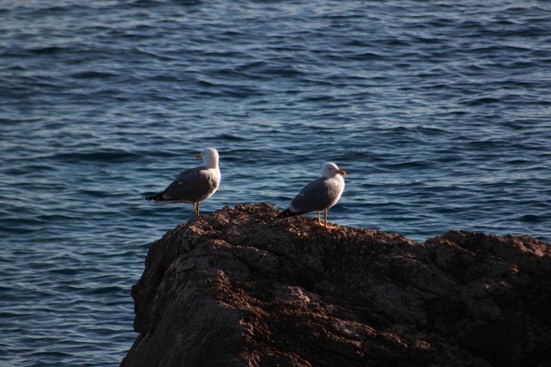 Seagulls perching on seashore