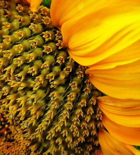 Eye 4 Nature Yellow Flowers Macro