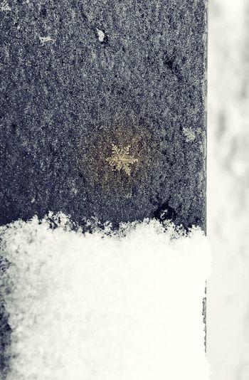Outdoors No People Day Cold Winter Snow Black And White Eyeem Photography EyeEm Black + White EyeEm Best Shots Star Focus Snowstar ❄️ EyeEmNewHere