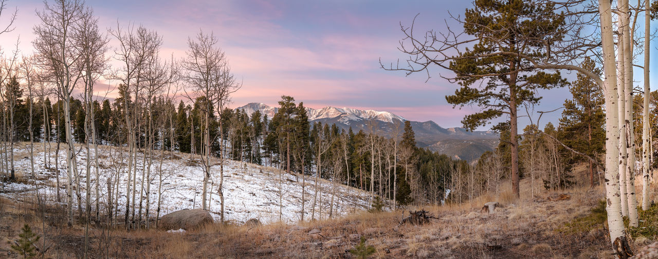 Morning In the Mountains Colorado Morning Sunrise Aspen Trees Beauty In Nature Cloud - Sky Environment Field Growth Land Landscape Mountain Nature No People Non-urban Scene Outdoors Pikes Peak Plant Scenics - Nature Sky Snow Tranquil Scene Tranquility Tree Winter EyeEmNewHere