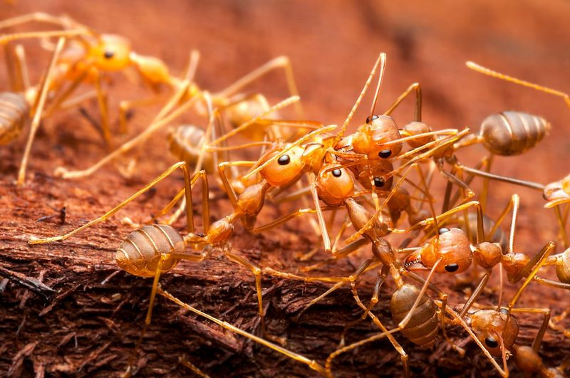 Close-up of ants on wood