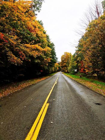 Tree Road The Way Forward Transportation Nature Autumn Beauty In Nature No People Outdoors Scenics Day Sky Michigan Fall Colors Fall Collection Seasons