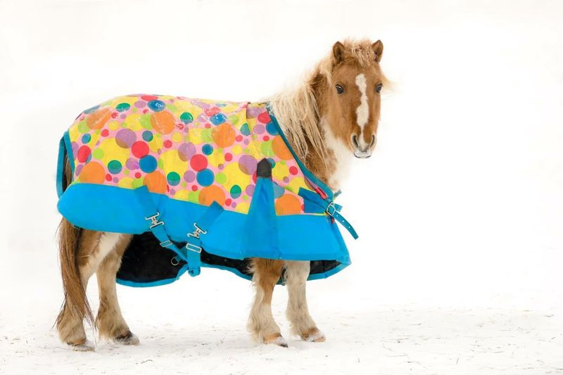 Portrait of horse covered in blanket standing on snowy field