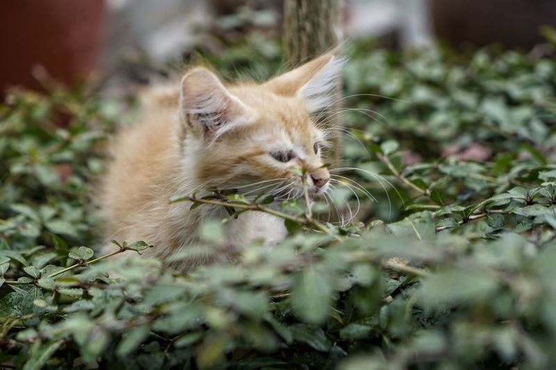 Animal Themes Cat Animal Feline One Animal Mammal Domestic Cat Domestic Pets Domestic Animals Selective Focus Vertebrate Plant No People Day Nature Relaxation Outdoors Whisker Looking Animal Head  Ginger Cat