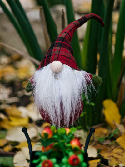 Close-up Focus On Foreground No People Plant Day Holiday Nature Selective Focus Flower Red Art And Craft Celebration Outdoors Decoration Flowering Plant Feather  White Color Softness