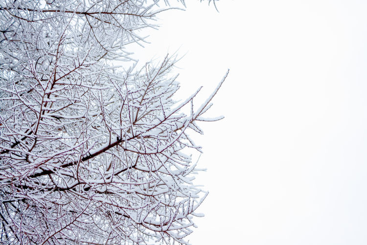 Winter Solitude Copy Space Morning Shades Of Winter Weather Whiteness Bare Tree Branch Clear Sky Cold Temperature Day Minimal Nature Minimalism Nature negative space No People Outdoors Seasonal Sky Snow Snowfall Snowflakes Tree Wallpaper White Background Winter