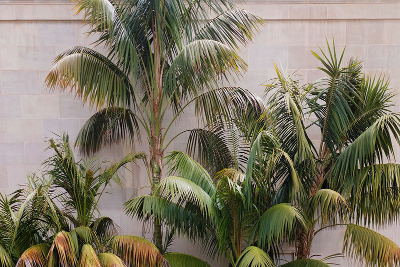 Close-up of palm trees