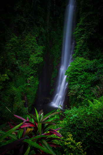 putuk Truno Waterfall Green Color Water Motion Long Exposure Nature Beauty In Nature No People Outdoors Scenics Power In Nature Freshness Day Forest Tree