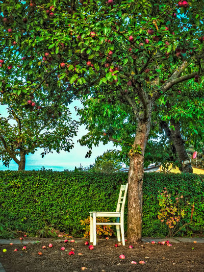 LioneNatureDay Green Color Growth Nature No People Tree Chair Chairs In Nature Chairs Outdoors Mix Yourself A Good Time Lost In The Landscape The Great Outdoors - 2018 EyeEm Awards The Creative - 2018 EyeEm Awards