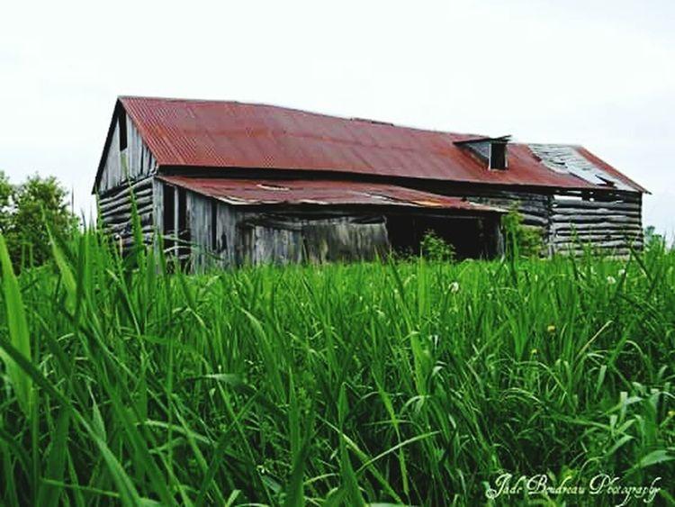 Farm Life Enjoying Life