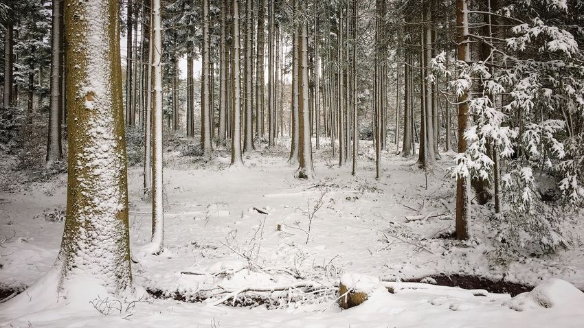 Photographer Photography Photooftheday PhonePhotography Picoftheday Outside Photography Naturephotography Outdoor Photography Winter Snow Tree Tree Trunk Forest Nature Cold Temperature Landscape WoodLand Outdoors Beauty In Nature Branch