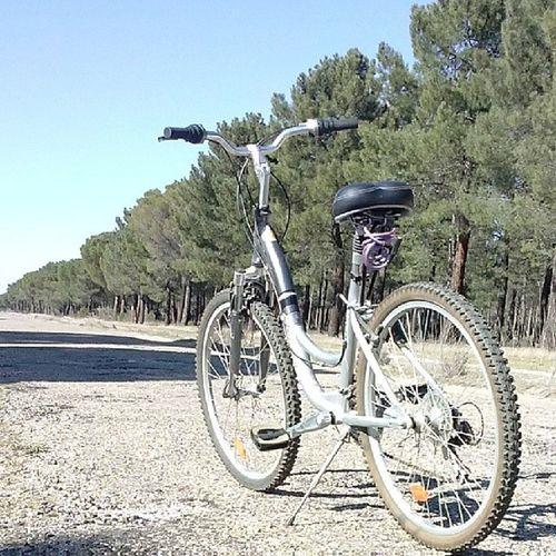 Paseito rico con lo bueno que hace :p Bici Bicicleta Paseo Pınar pino naturaleza natural natura verde paisaje