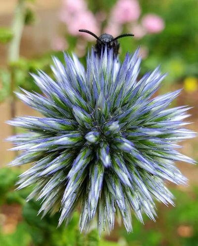 EyeEm Nature Lover EyeEm Best Shots EyeEm Best Shots - Nature Flower Beauty In Nature Animal Themes One Animal