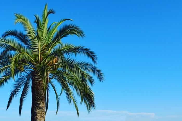 PALMTREE IN SPLIT, CROATIA. Water Nature Landscape Palm Palm Trees Palmtree Palms Vacation Summer Roadtrip Sky Blue Sky Clouds Painting Photography