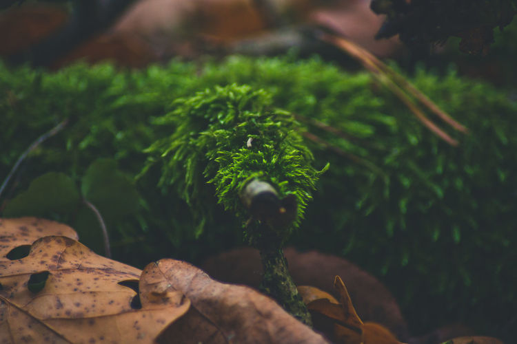 Plant Part Leaf Green Color Plant Growth Nature Close-up Day No People Selective Focus Beauty In Nature Focus On Foreground Outdoors Tree Food And Drink Food Freshness High Angle View Land Vegetable Leaves EyeEm Nature Collection In The Woods