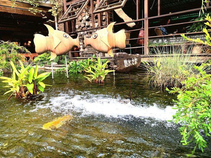 魚 Water Nature Day No People Reflection Plant Lake