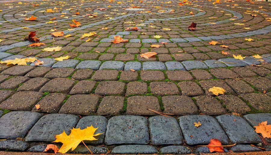 Close-up of autumn leaves fallen on cobblestone