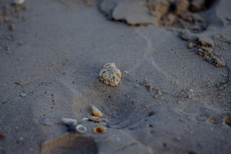 Sand Beach Land Nature Shell Seashell