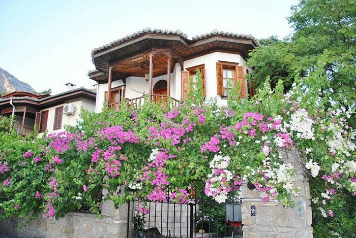 привет мир Hello World No Edit/no Filter Eeyem Photography Muğla Akyaka Turkey Flowers