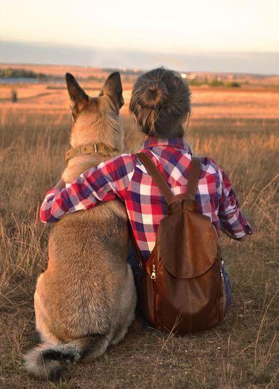Friendship Pets