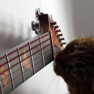 Customguitar Customguitars Handmadeguitar Handcraftedguitar Guitarproject Guitarporn Guitars Guitarstroy Music Rock Vladslav Vladslavguitars