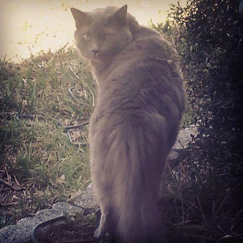 Treating him to a few minutes outside Hesmybaby Highmaintainence Housecat Catsoftheworld Catsofinstagram Beautifulcats Graycats