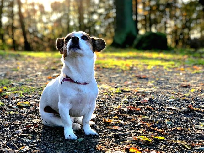 Ein spontanes Foto von meinen Hund, muss ja auch mal sein😊 Dog Pets One Animal Domestic Animals Animal Themes Sitting Outdoors